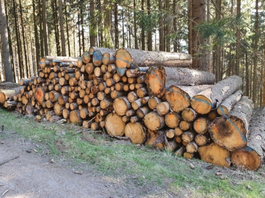 Suché drevo smrk